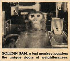 Solemn Sam, a monkey locked into a harness